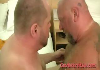 big wild anal drilling bears