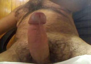 large tit hairy bear